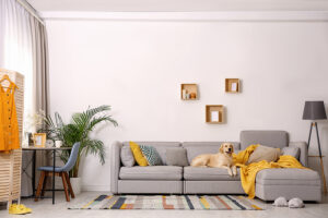 Pet friendly furnished apartment