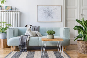 Pets stay in Furnished Apartments