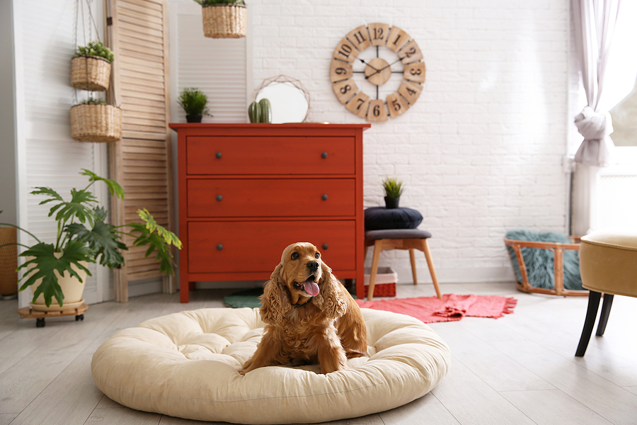 Pets in Your Corporate Rental