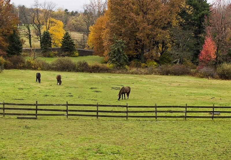 View of Horses from the Deck