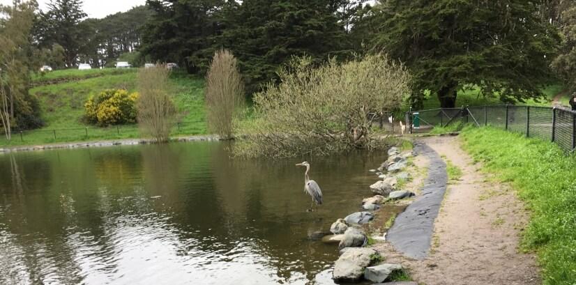 Walking Path in McClaren Park 1 blk away
