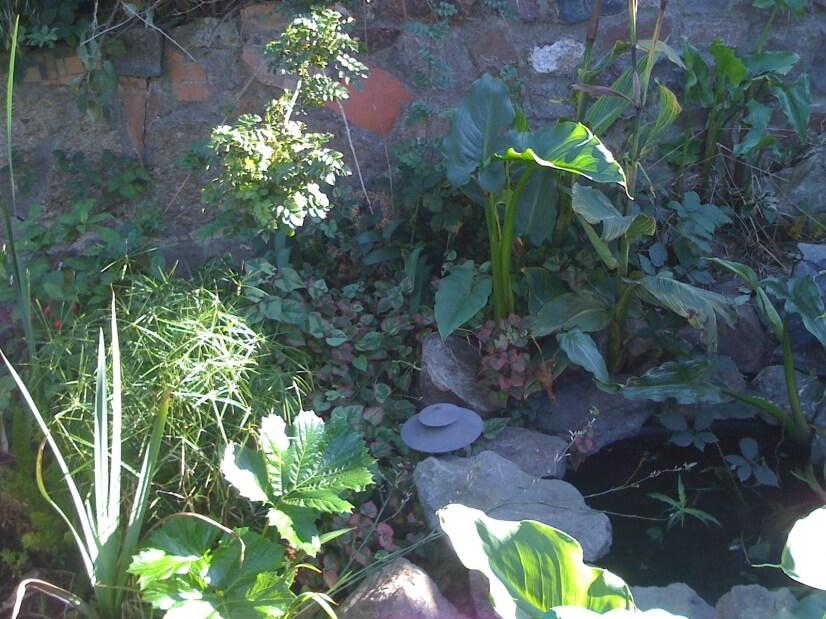 Backyard Meditation Garden