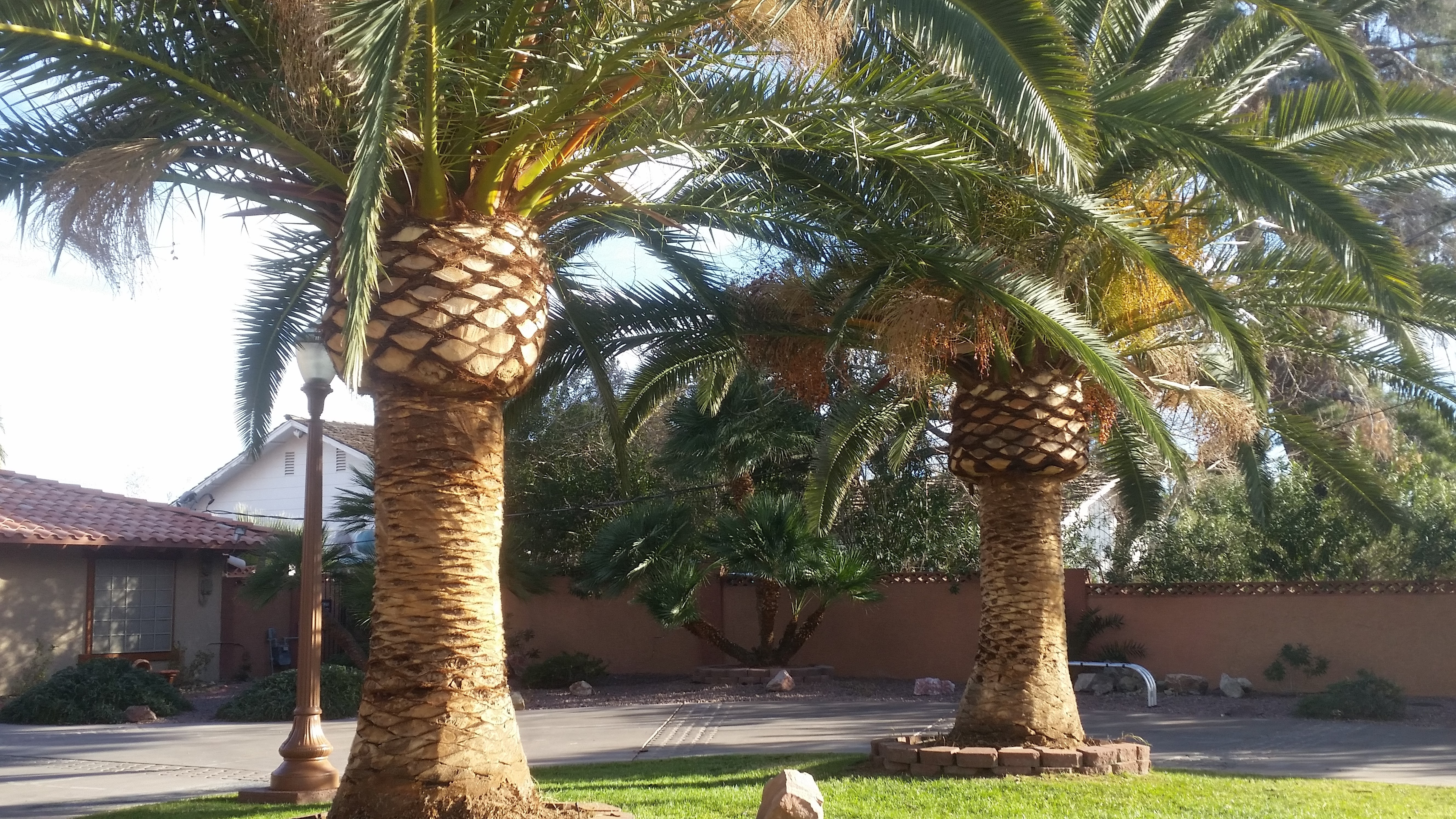 image 2 furnished 2 bedroom House for rent in Paradise, Las Vegas Area
