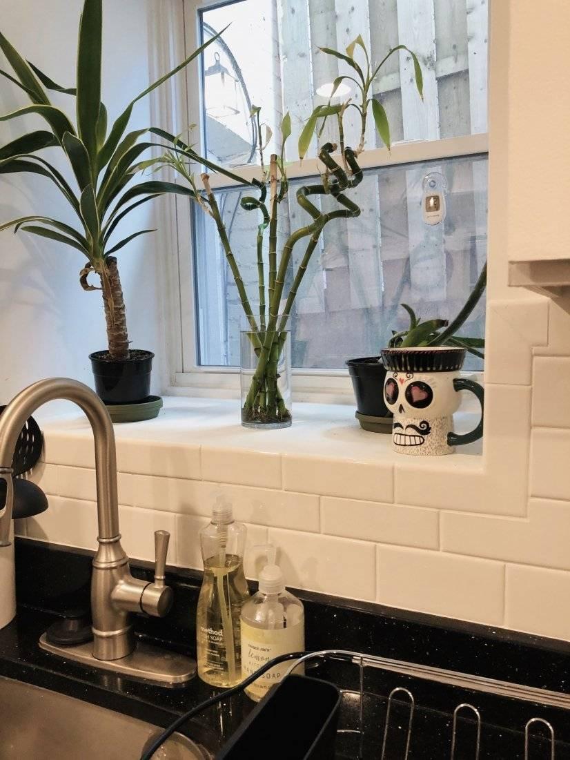 Plant an herb garden in our kitchen bay
