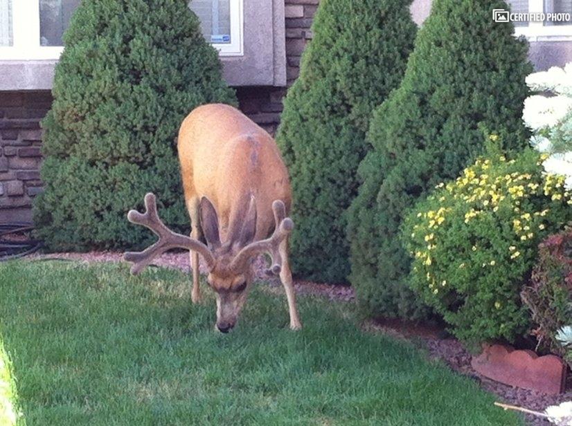 Local Visitor