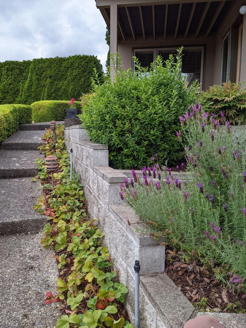 Walkway to front door & patio