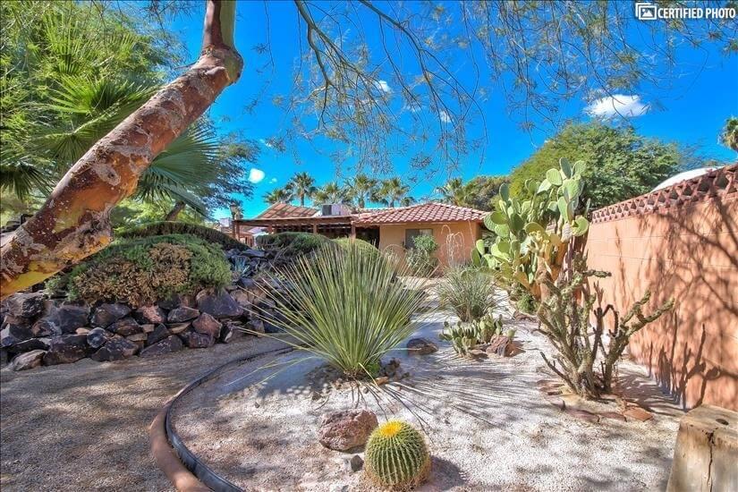 Cactus garden in common area