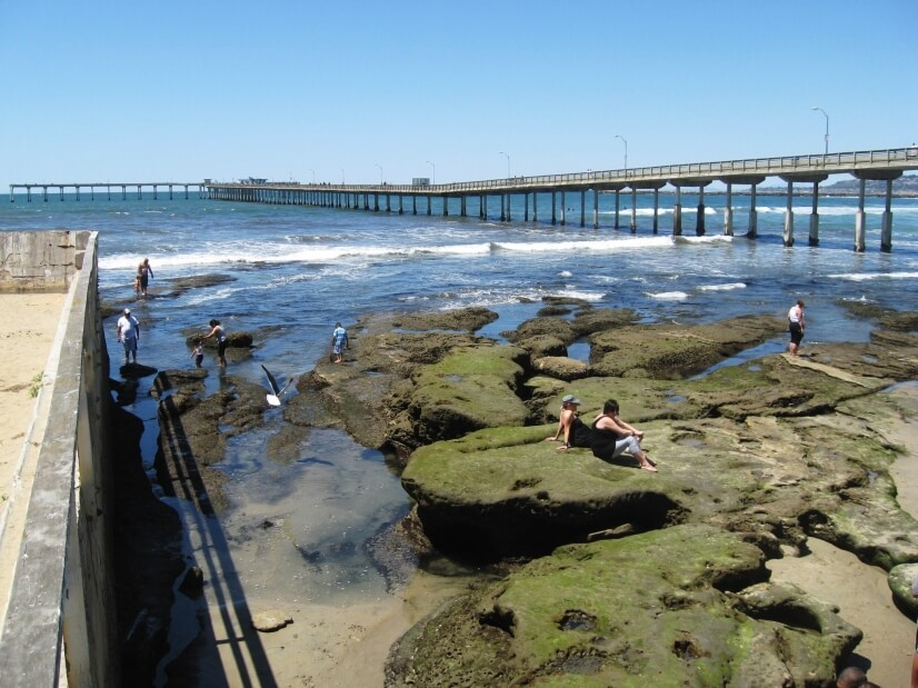 Exploring the tide pools with the OB Pier in the background