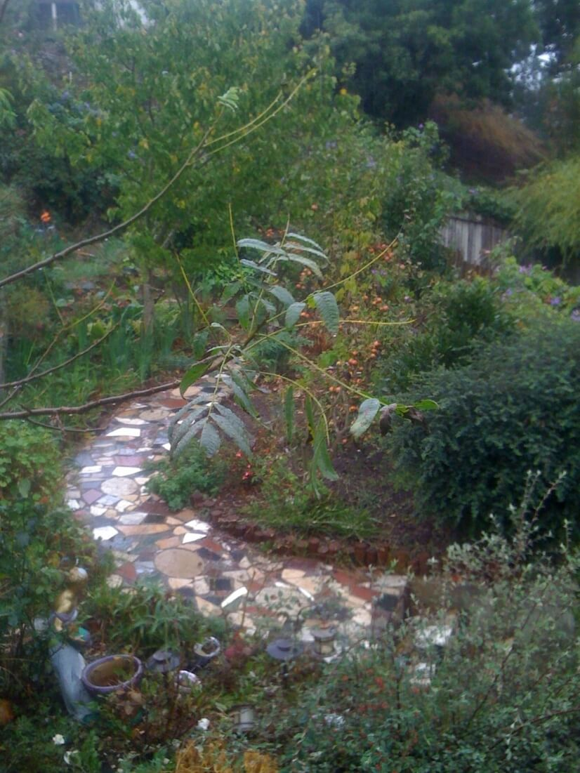 Pathway in Backyard Meditation Garden