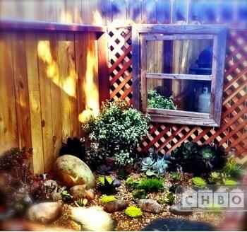 Succulent Garden Feature.