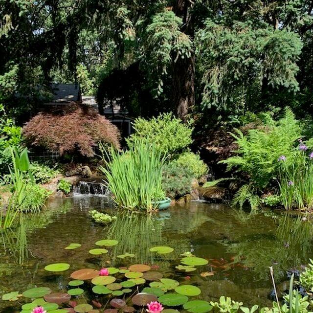 fish pond and waterfalls