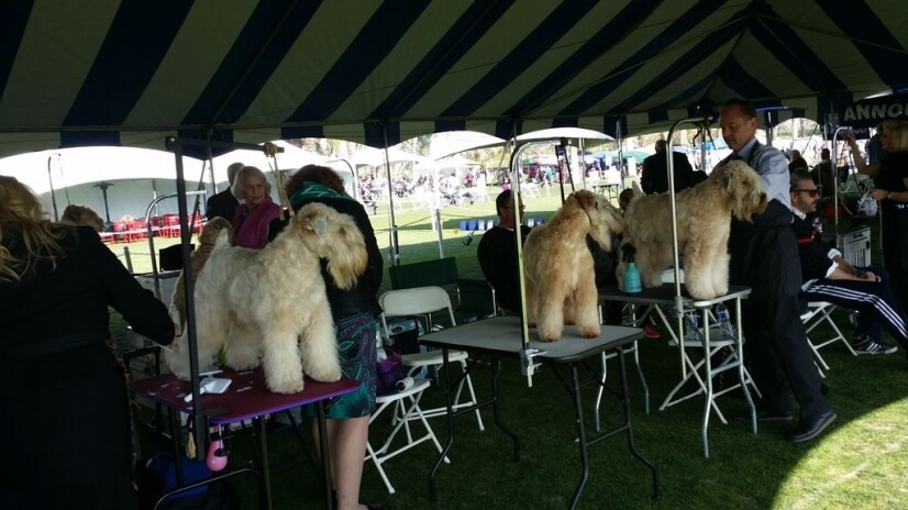 2020 JANUARY 5 must see our World wide Dog Show 5 min   away