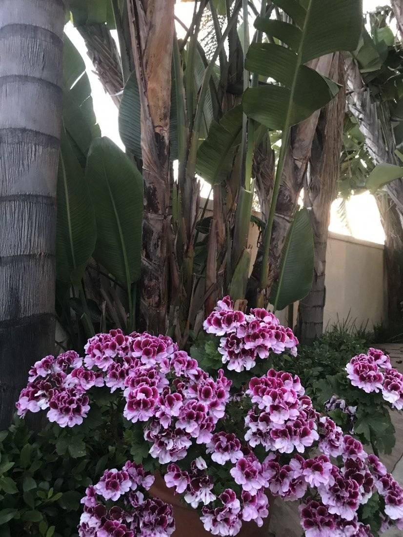 Cheerful blooms adorn her gardens year-round!