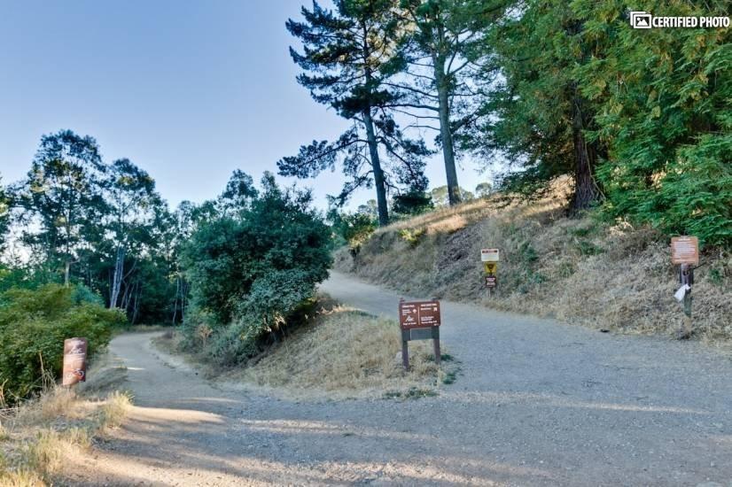 Redwood Regional Park 2