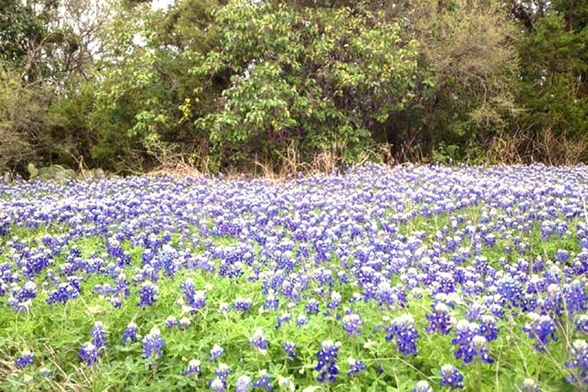 Blunn Creek has many springtime Wildflowers!!!