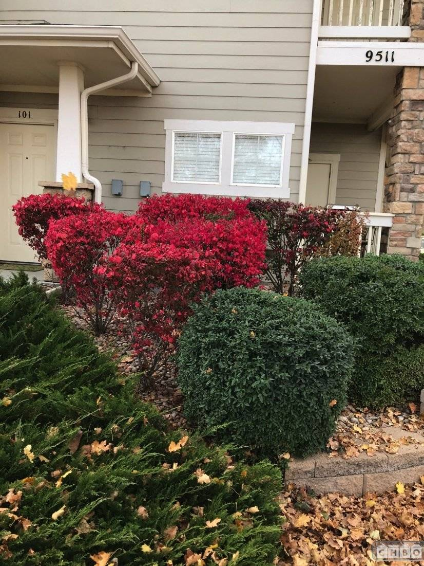 image 7 furnished 1 bedroom Townhouse for rent in Parker, Douglas County