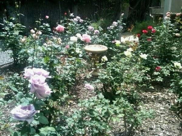Historic Rose Garden with bird bath