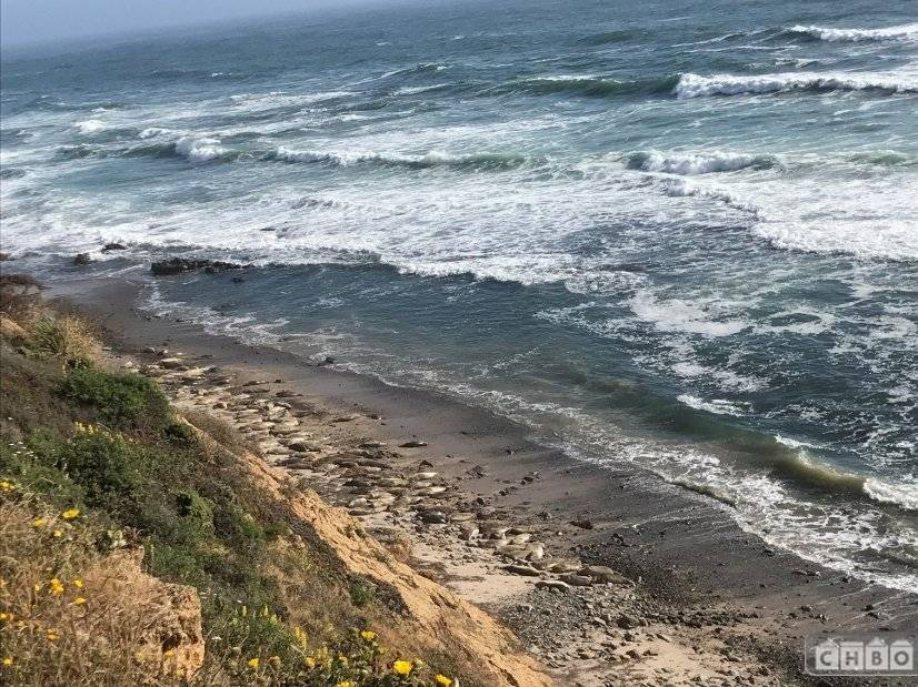 image 2 furnished 2 bedroom House for rent in Moss Beach, San Mateo (Peninsula)